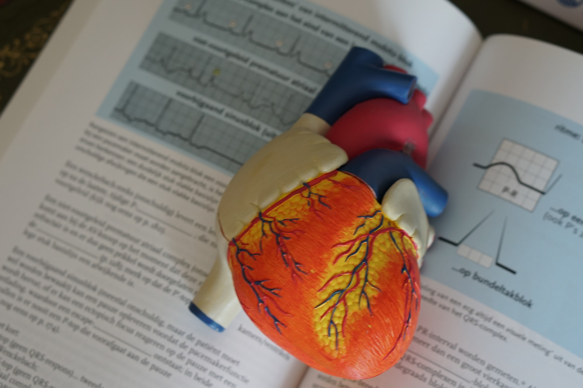 Heart model to explain how the heart works to patients