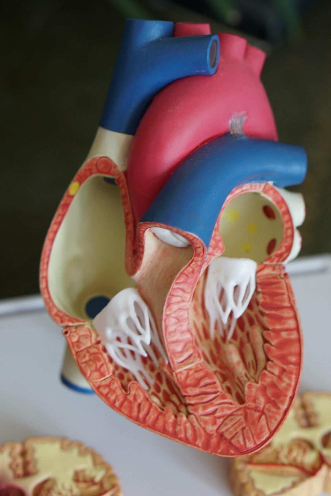 Open heart model