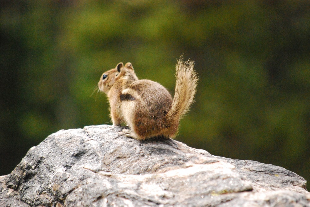 selective focus photography of brown squirel