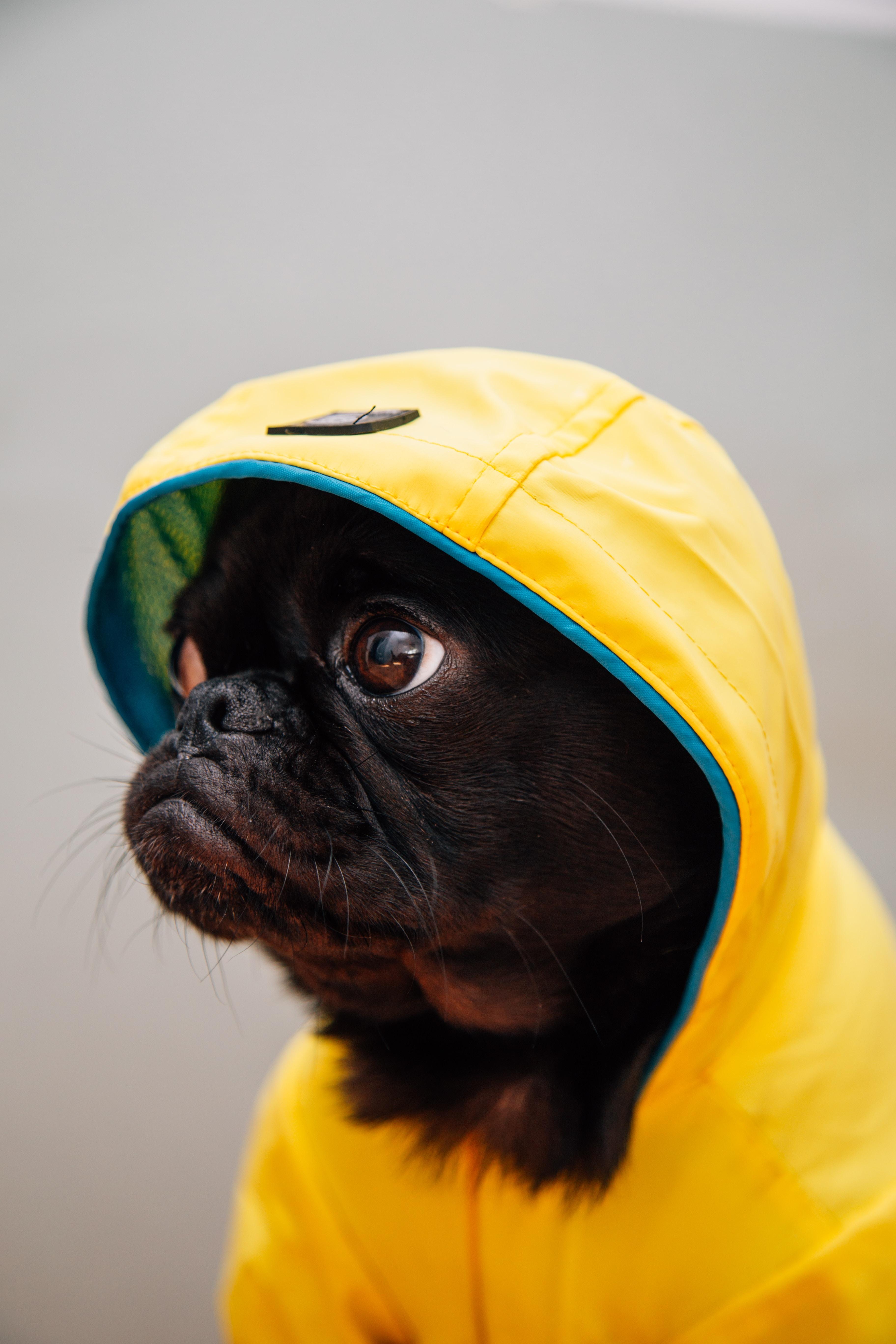 adult black puppy in yellow raincoat