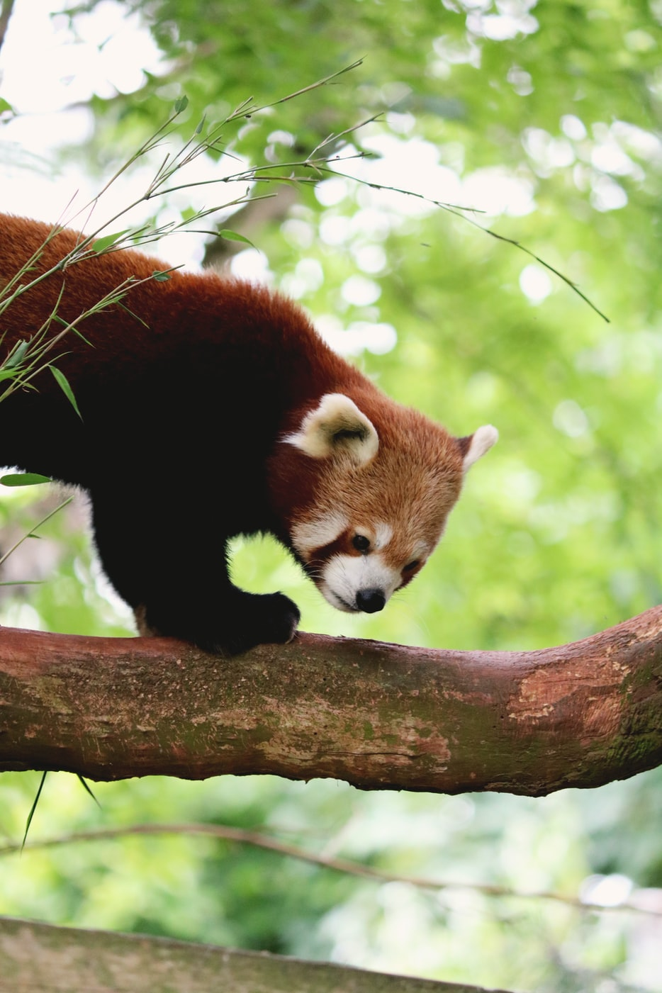 AWS and Pandas