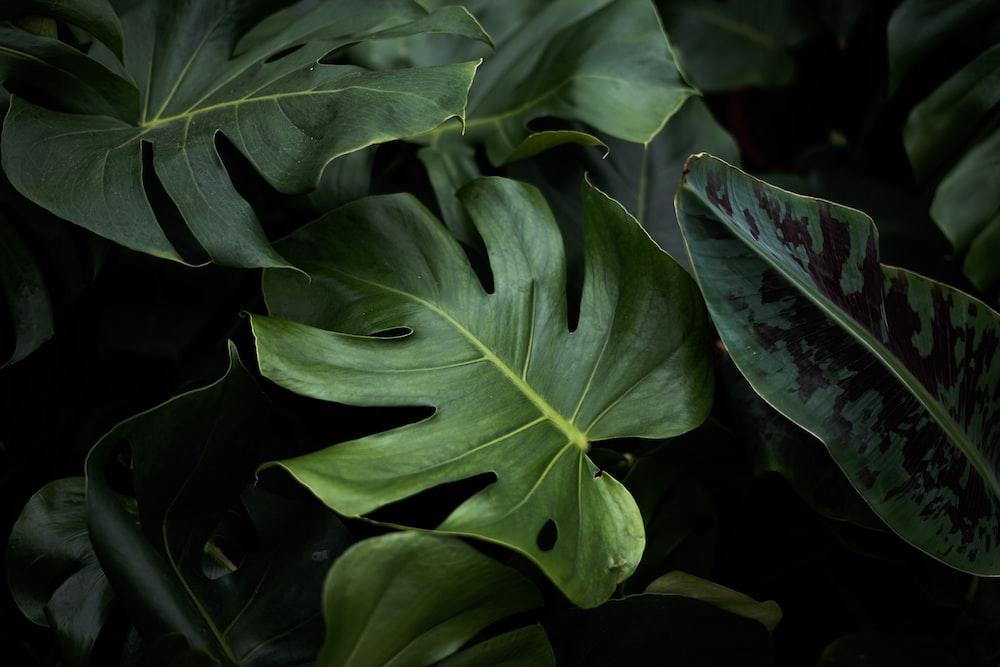 closeup photo of green plants