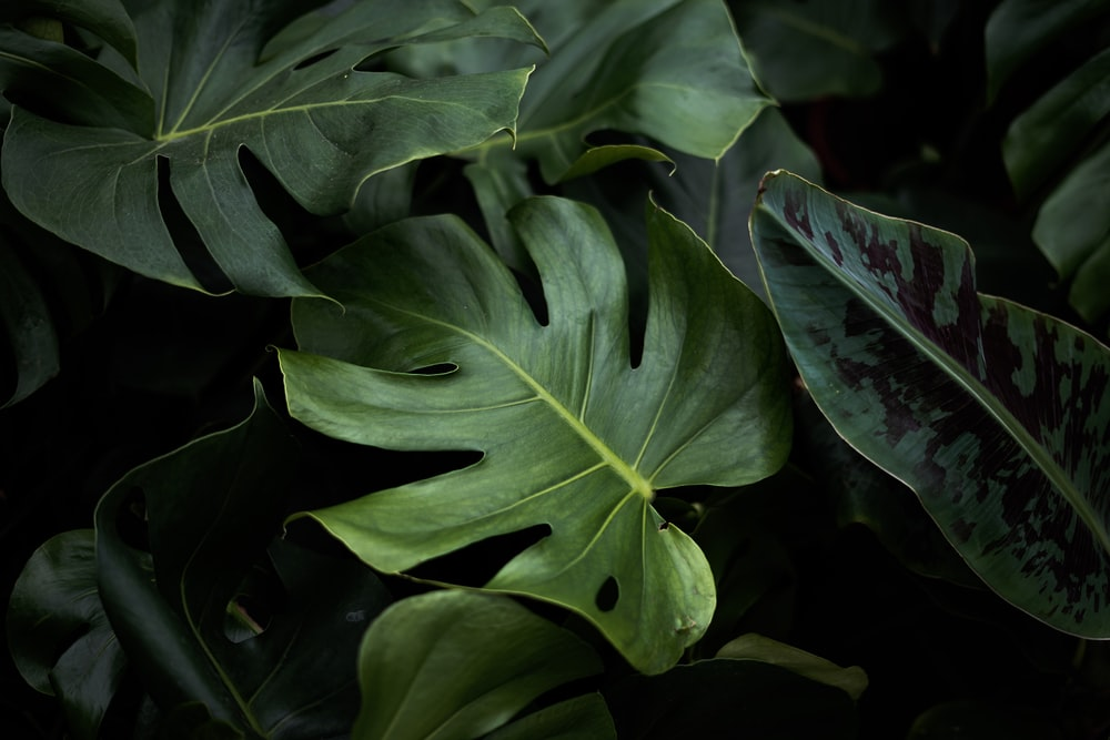 closeup photo of green plants