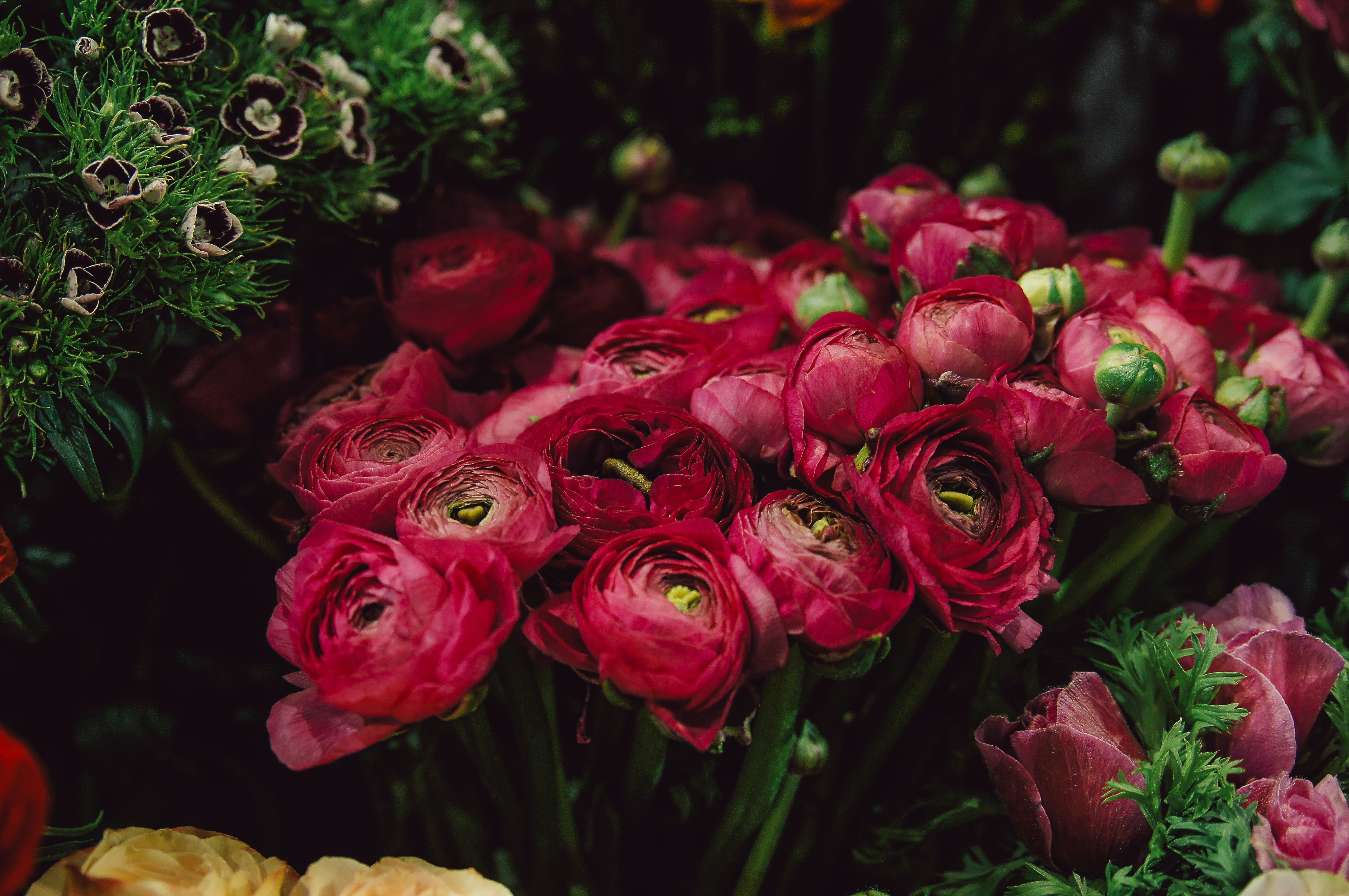 selective focus photography of red rose flowers