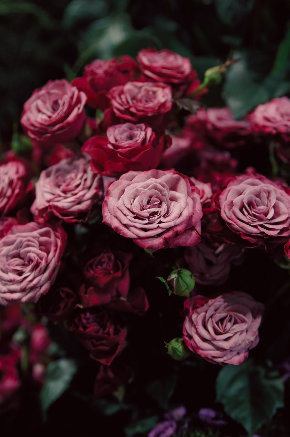 500 Flora Pictures Download Free Images On Unsplash