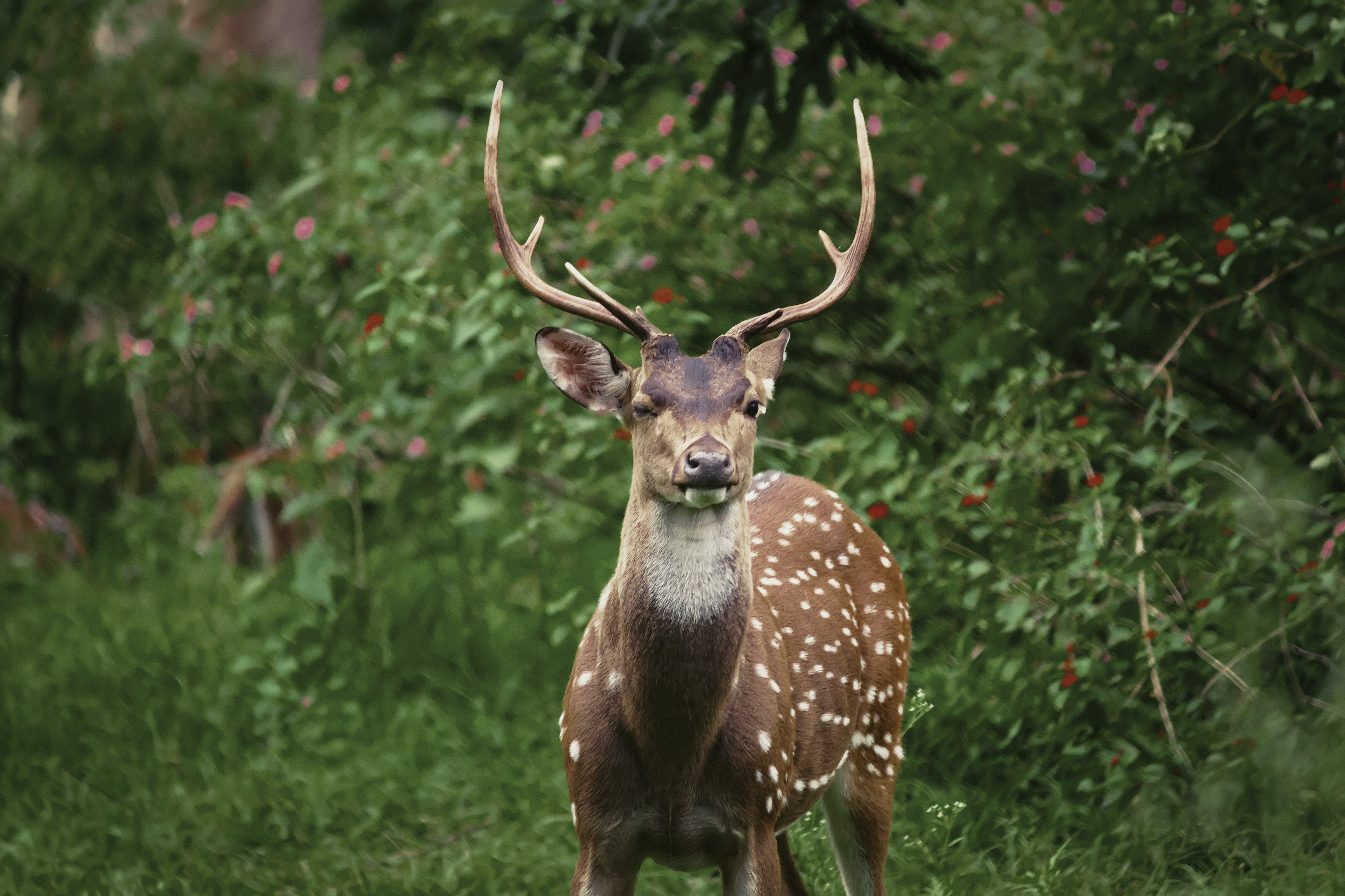 spotted deer standing near green bushes