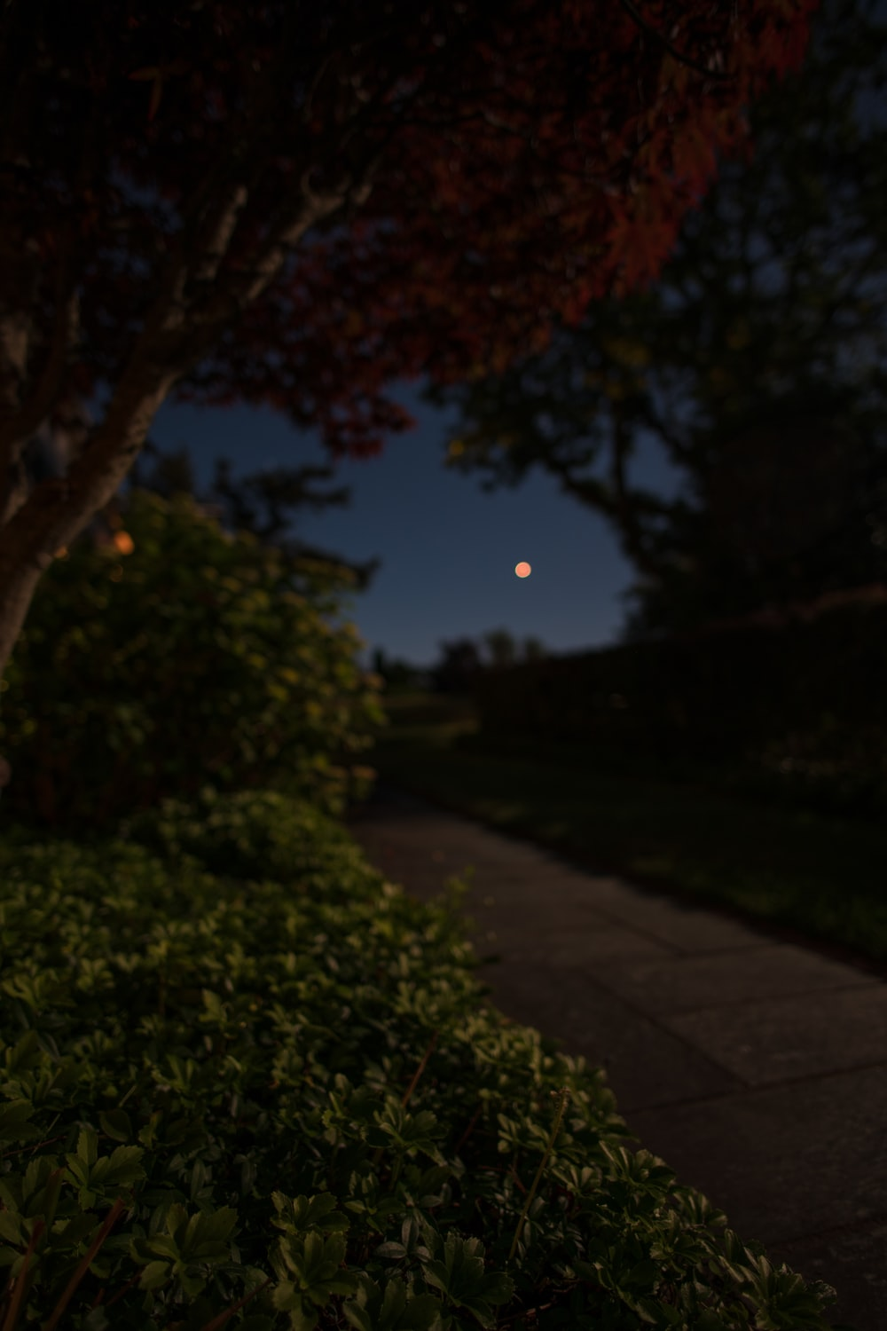 selective focus photography of moon