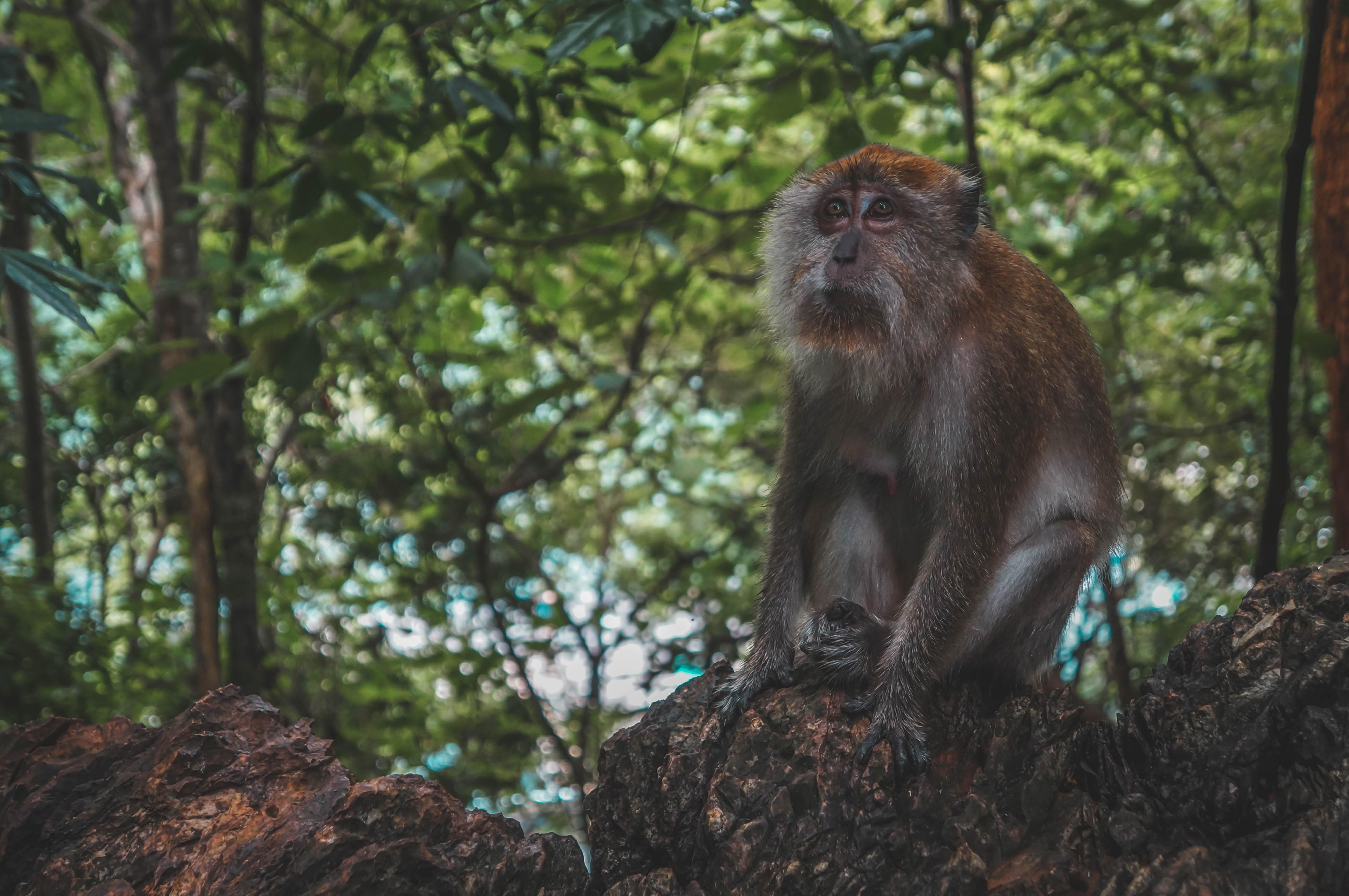 brown monkey sitting beside trees