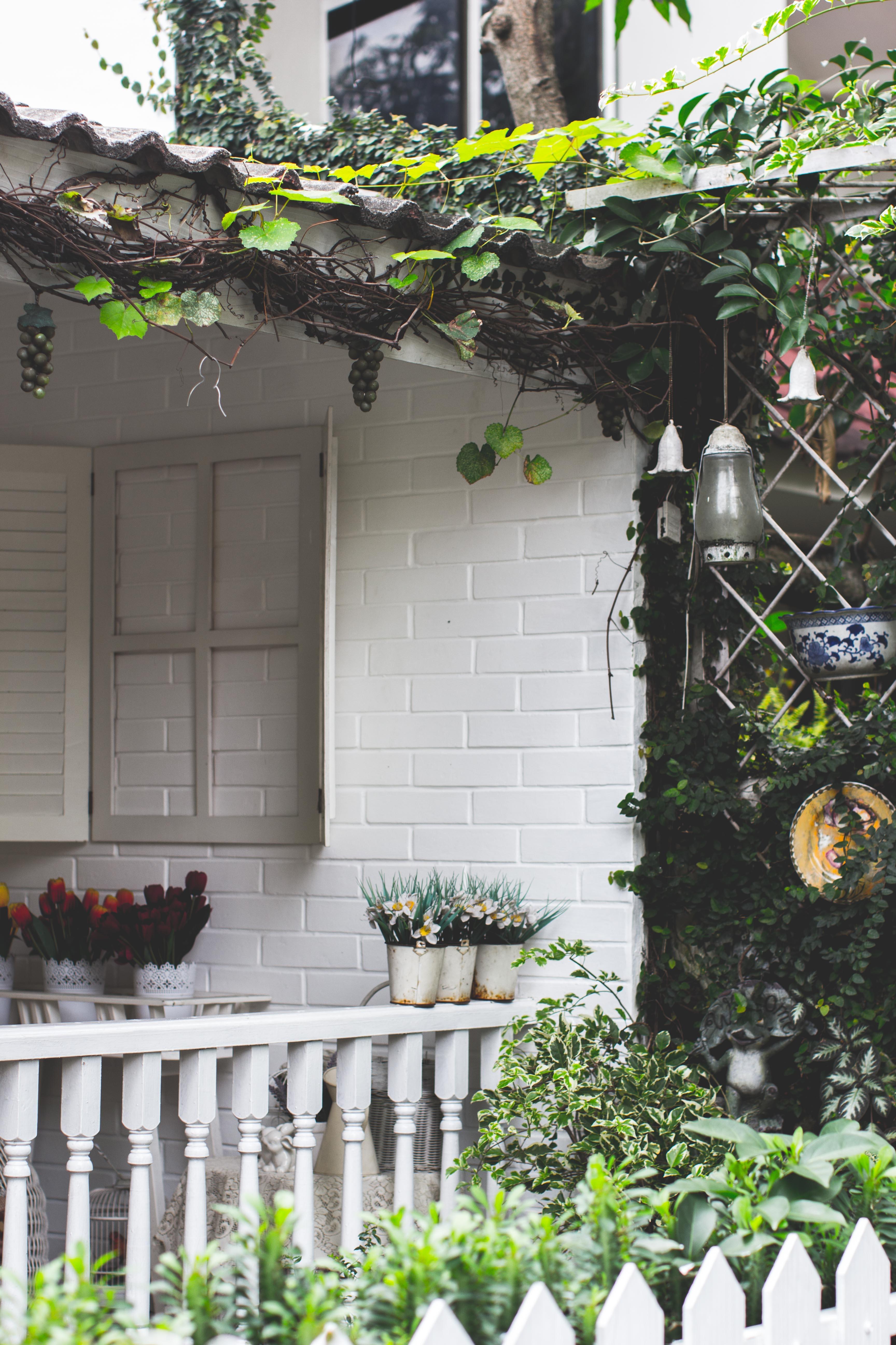 garden beside house