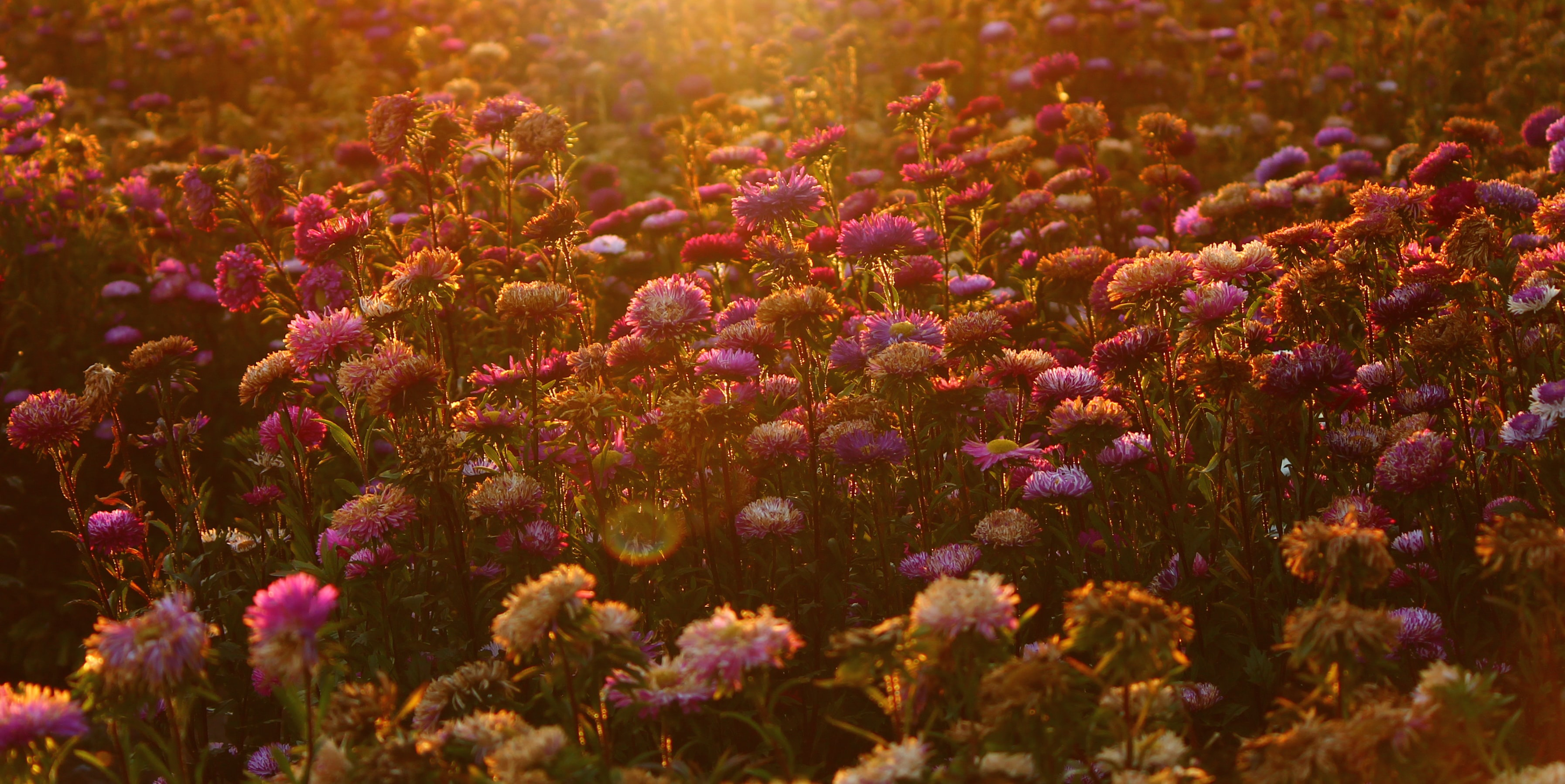 photo of assorted-color flower field