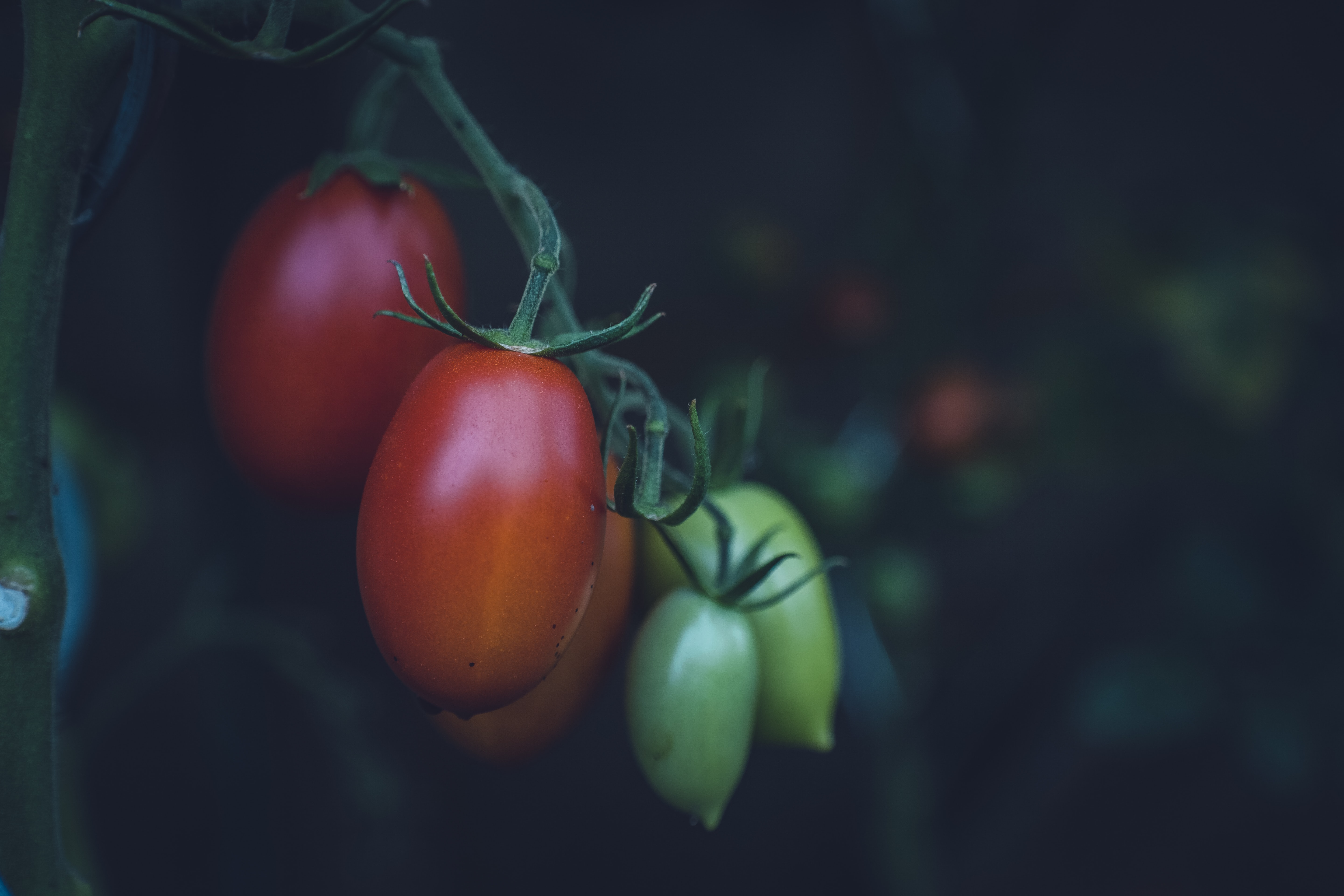 selective focus photography of red and green fruits