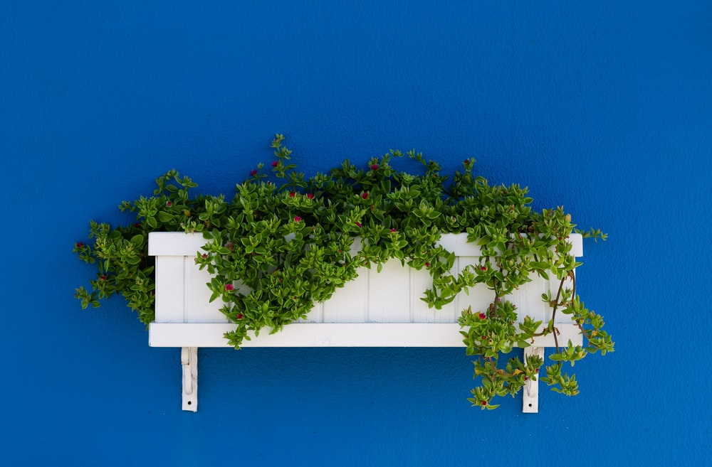 green leafed plant on white wooden wall-mounted rack