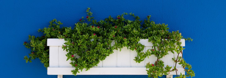 Planting a Window Box Garden