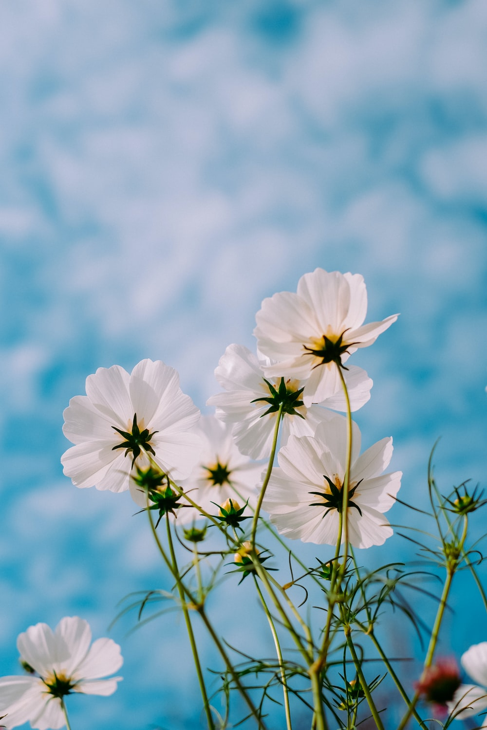 white petaled flowers during day