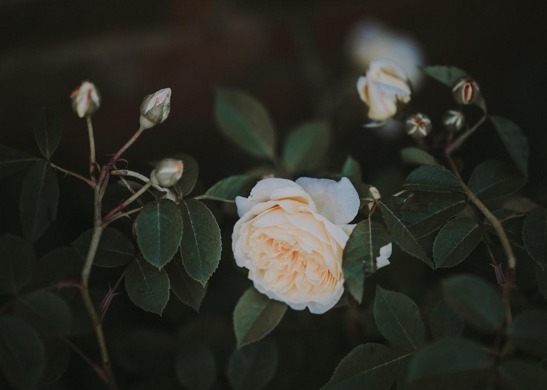 3899. Virágok