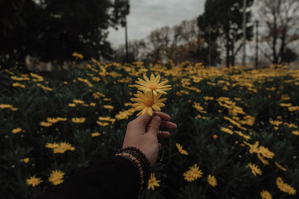 Flower Background Tumblr Aesthetic