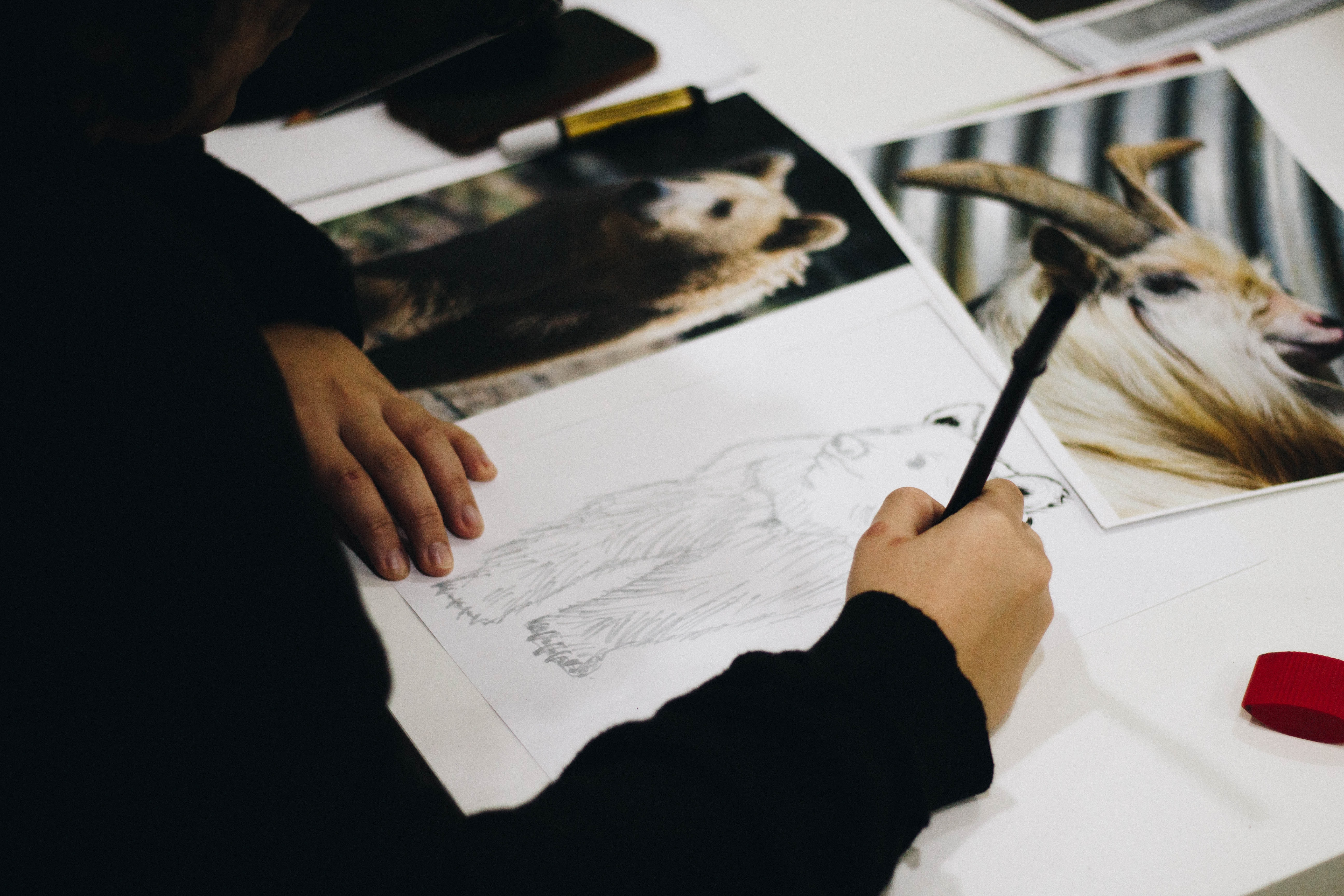 person drawing brown bear on paper