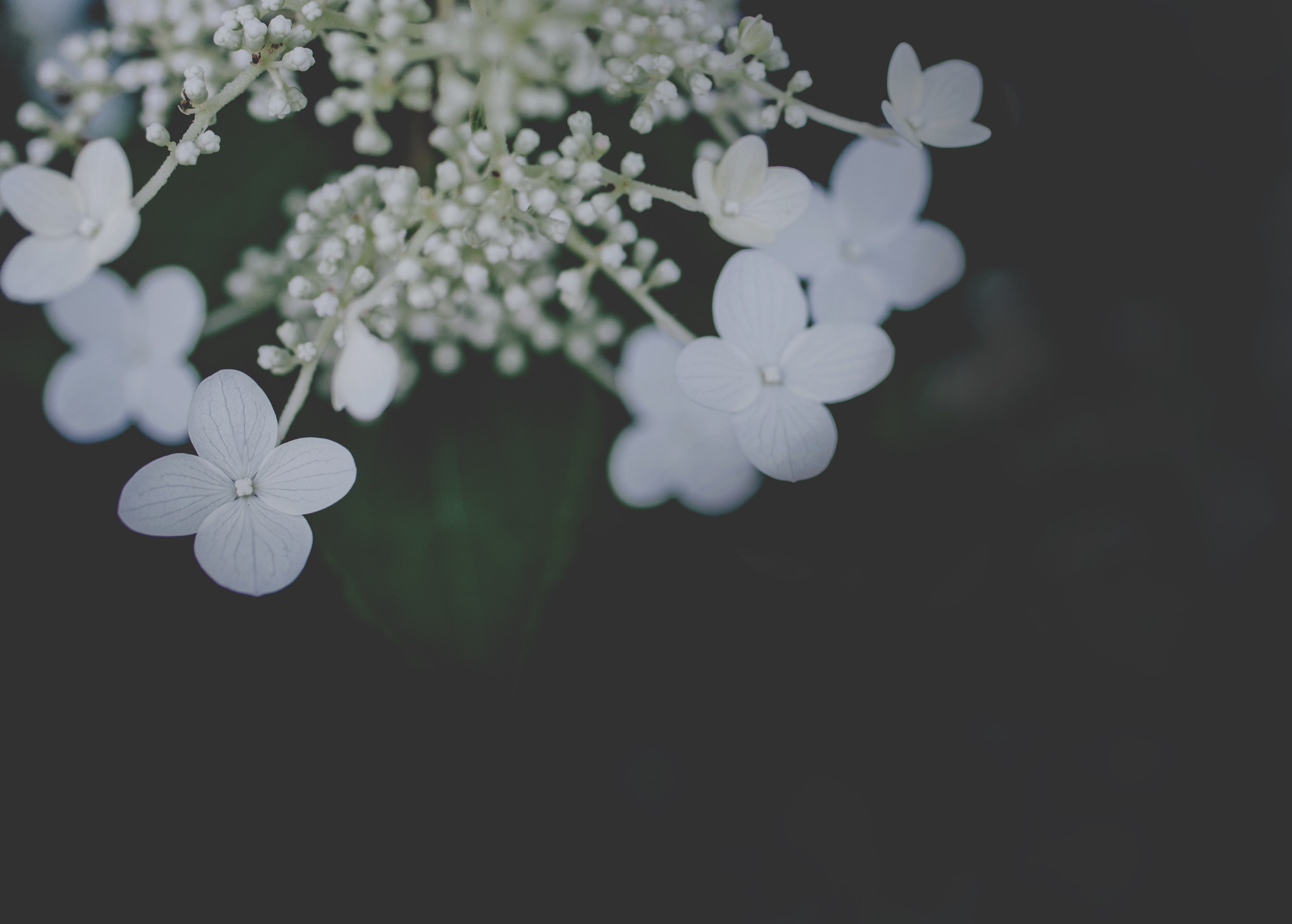 selective focus photo of a white petaled flowers