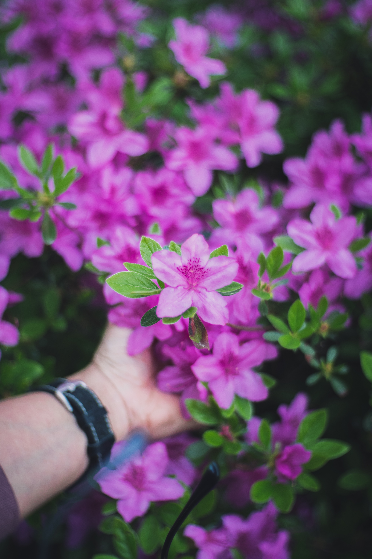 selective focused photo of a purple petaled flowers