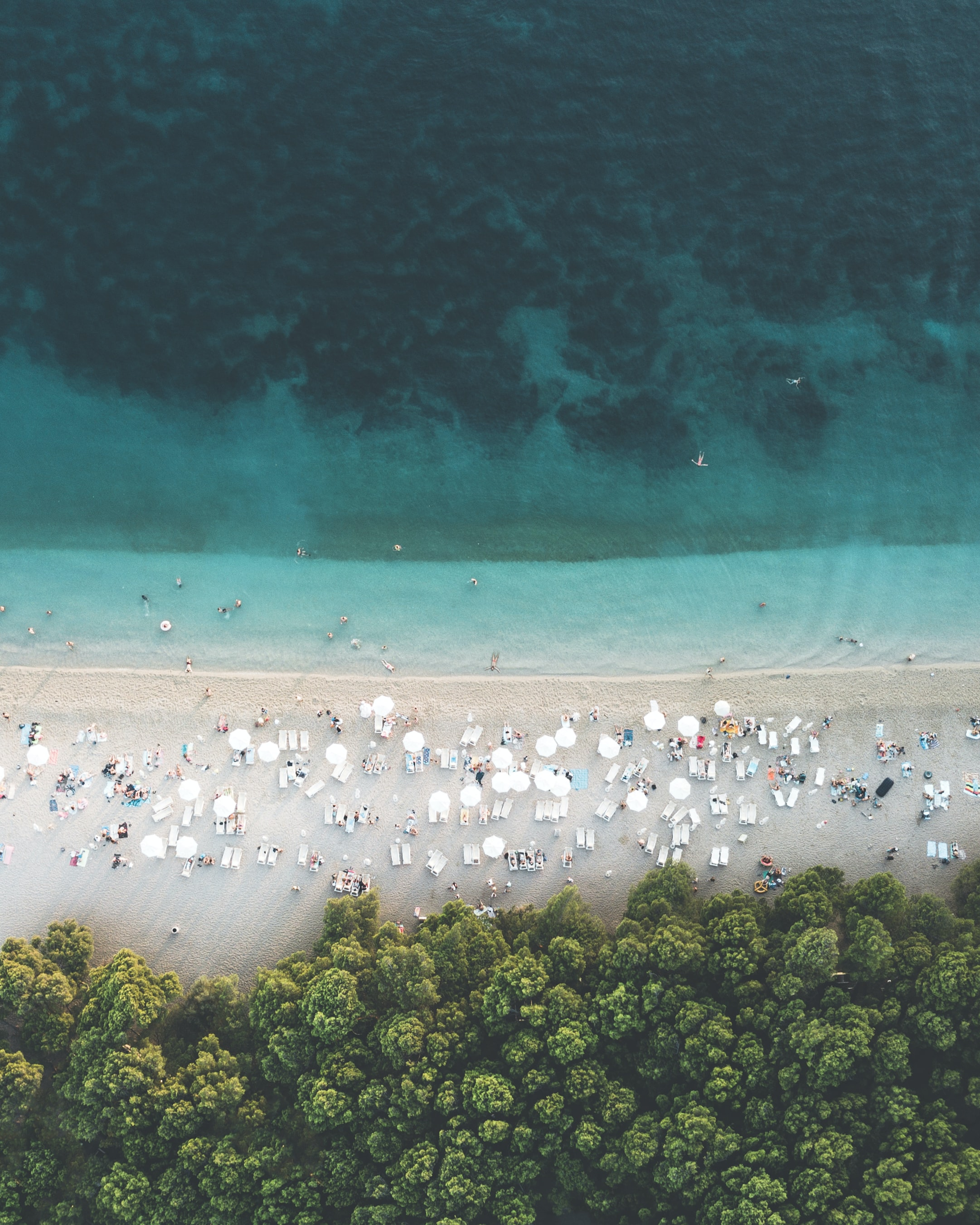 people on the coastline near trees aerial photography