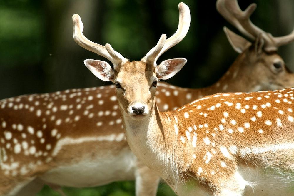 selective focus photography of deers