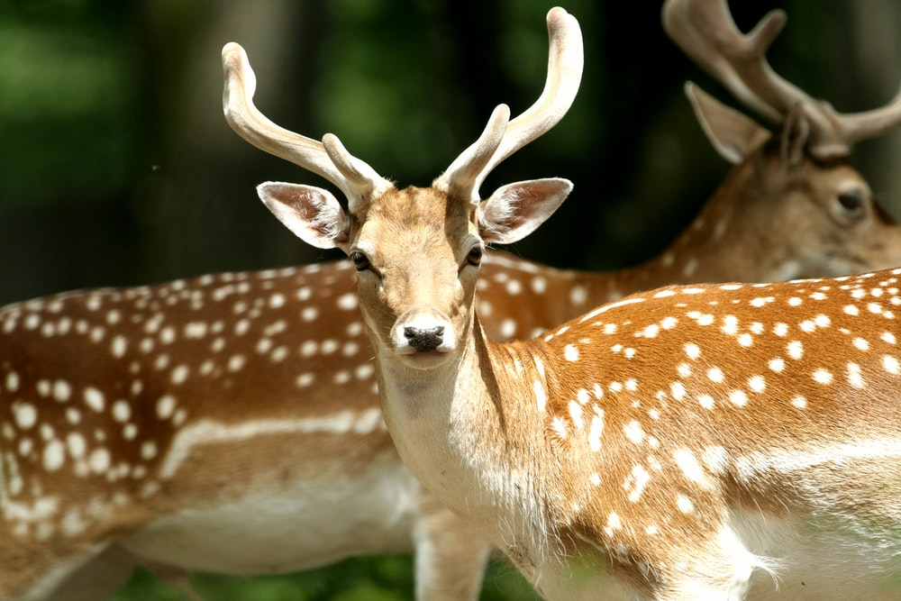 selective focus photography of deers