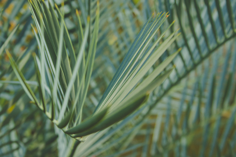 closeup photography of green leaf palm tree