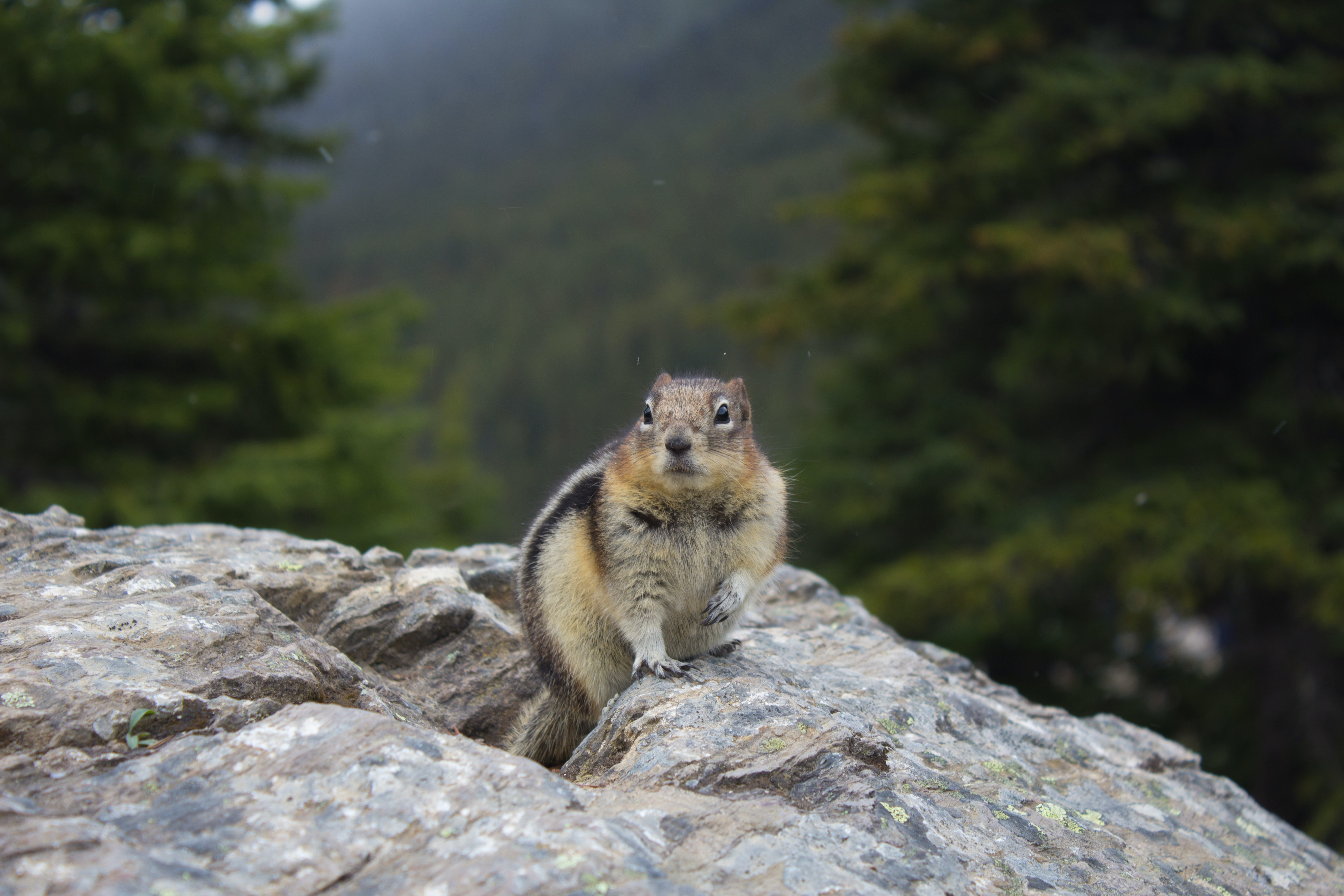 brown and white squirrel on rock during daytime