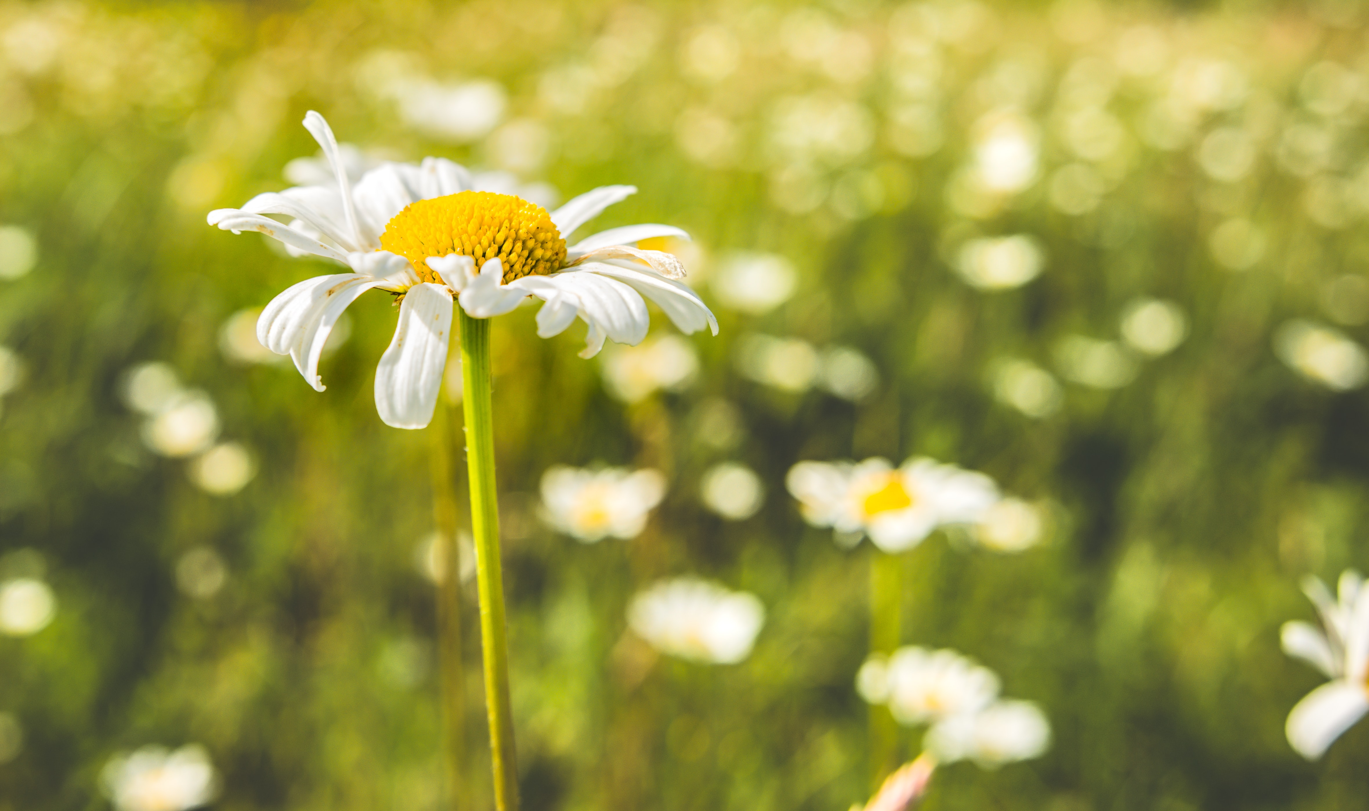 selective focus photography of yellow and white petaled flower