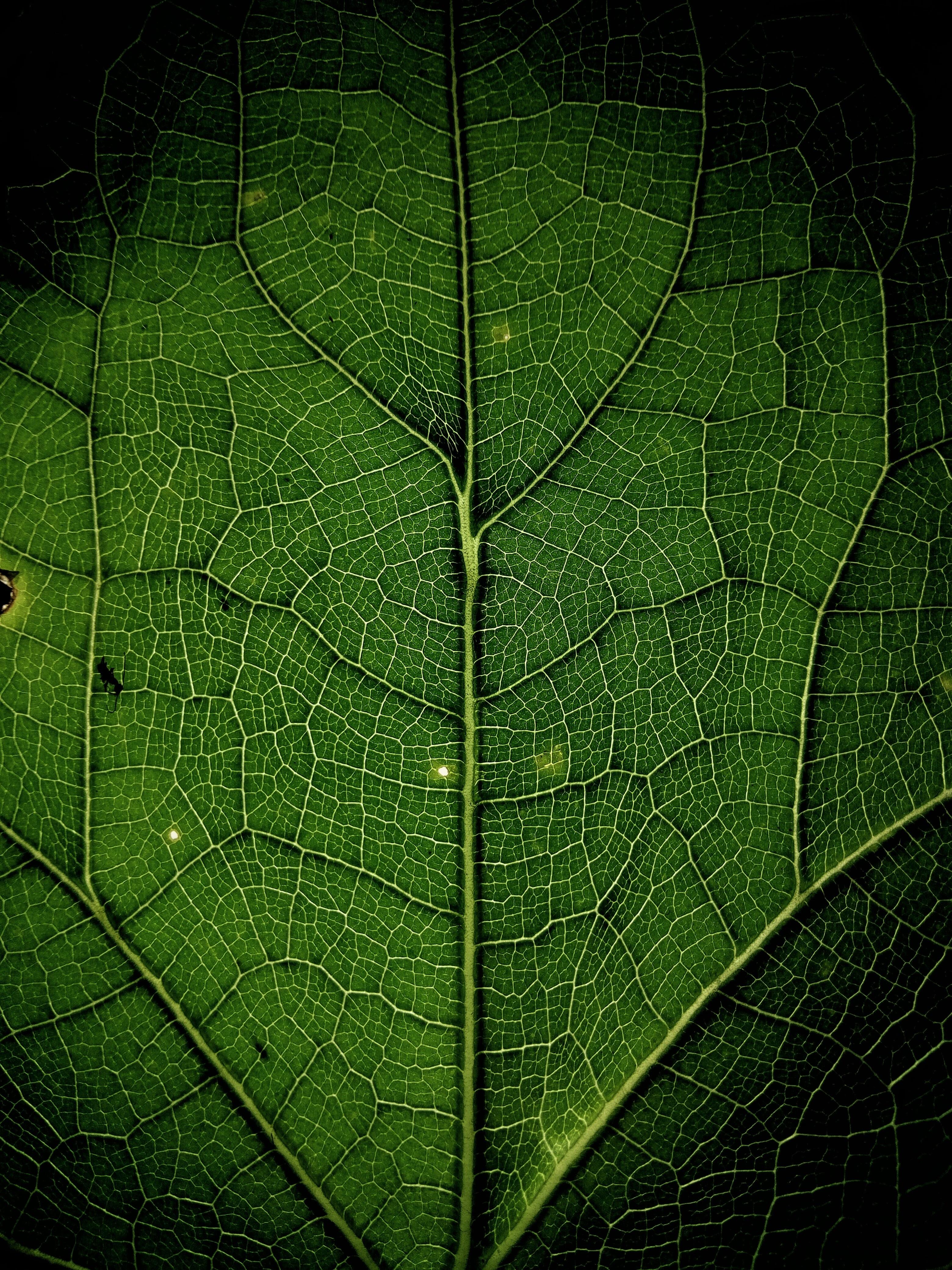 close up photo of leaf