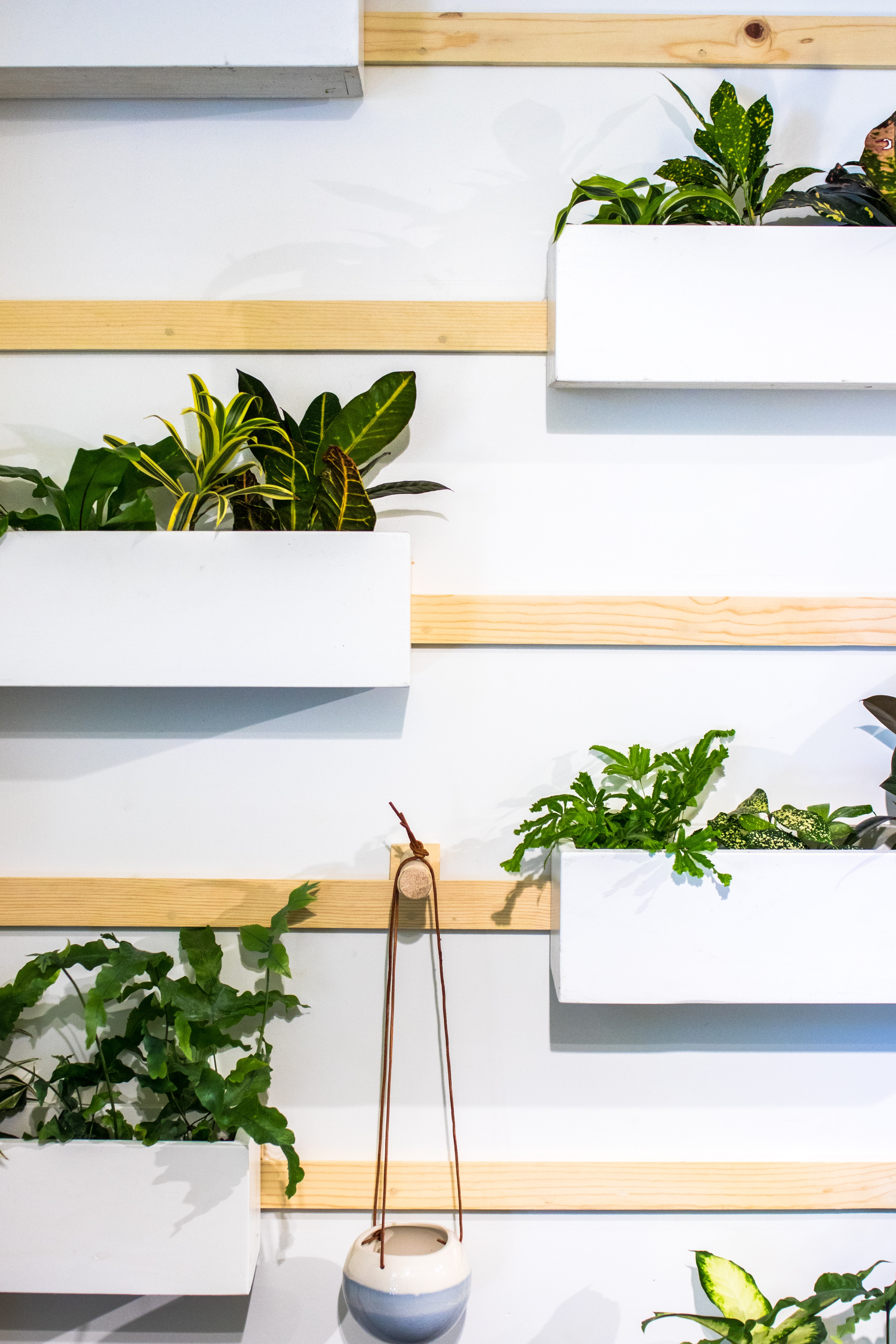 plants hanged on white wall