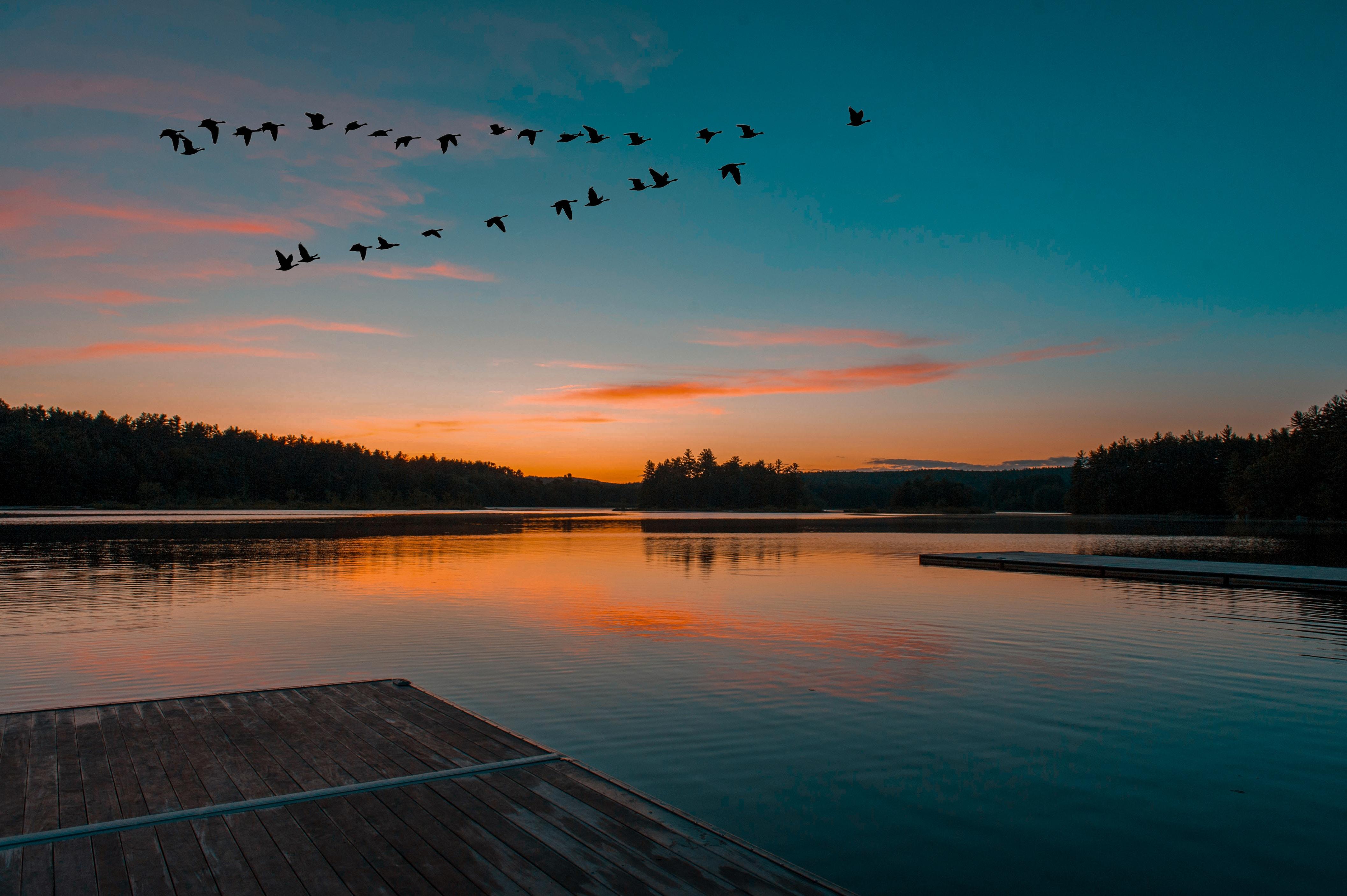 calm body of water under flock of birds flying