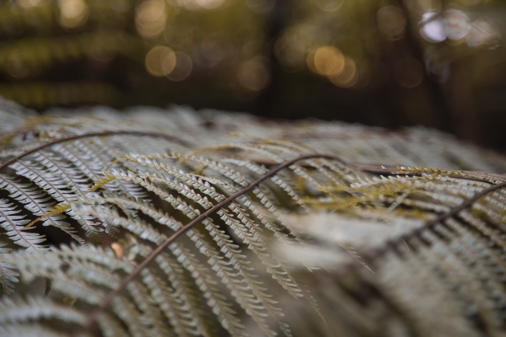 selective photography of ferns