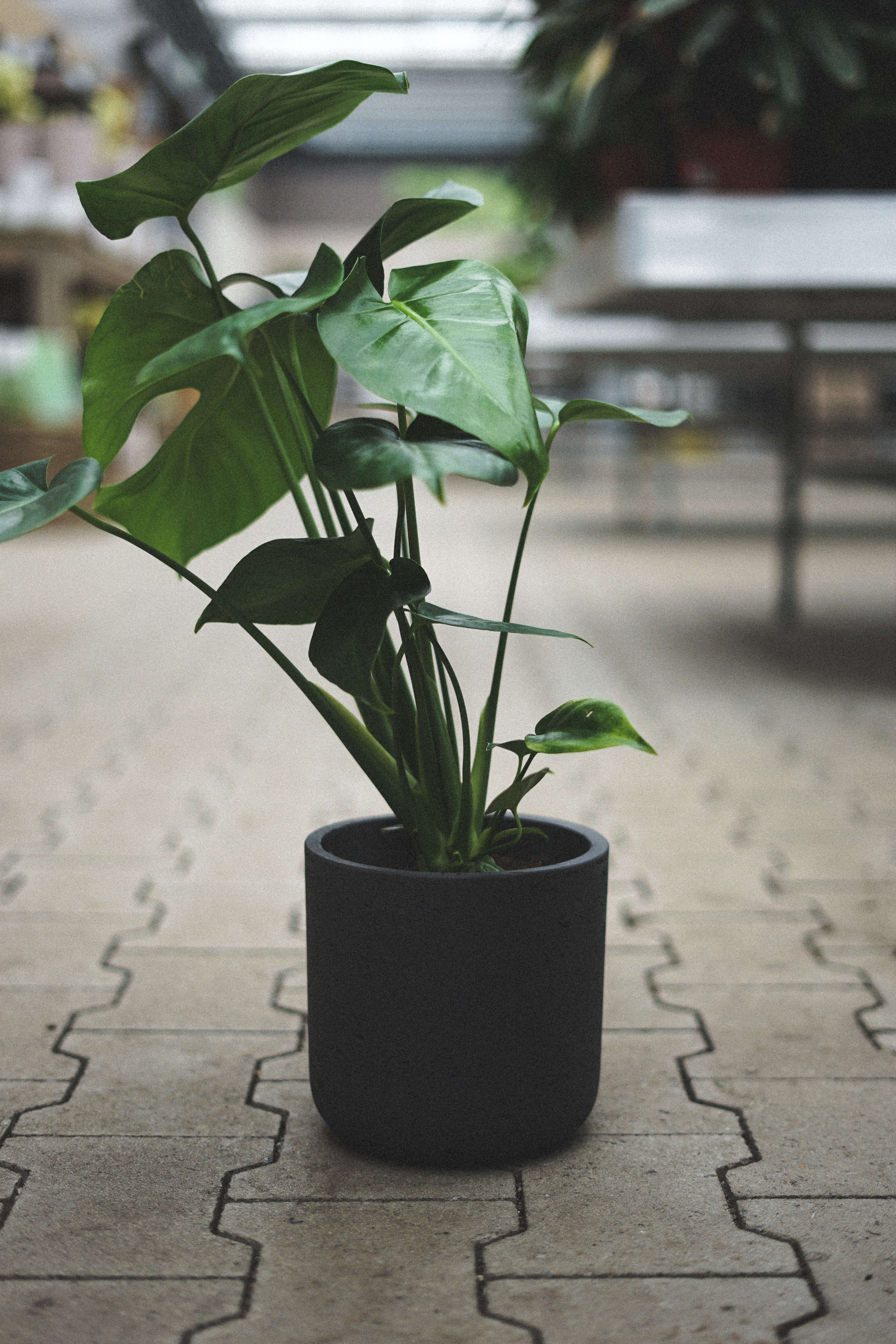 green leaf plant in black plant pot