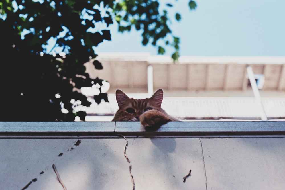 brown cat lying on fence