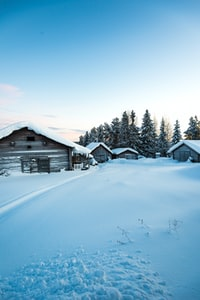 snow covered houses and land near trees during day