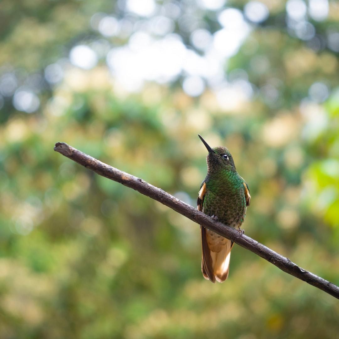 Lovely little hummingbird