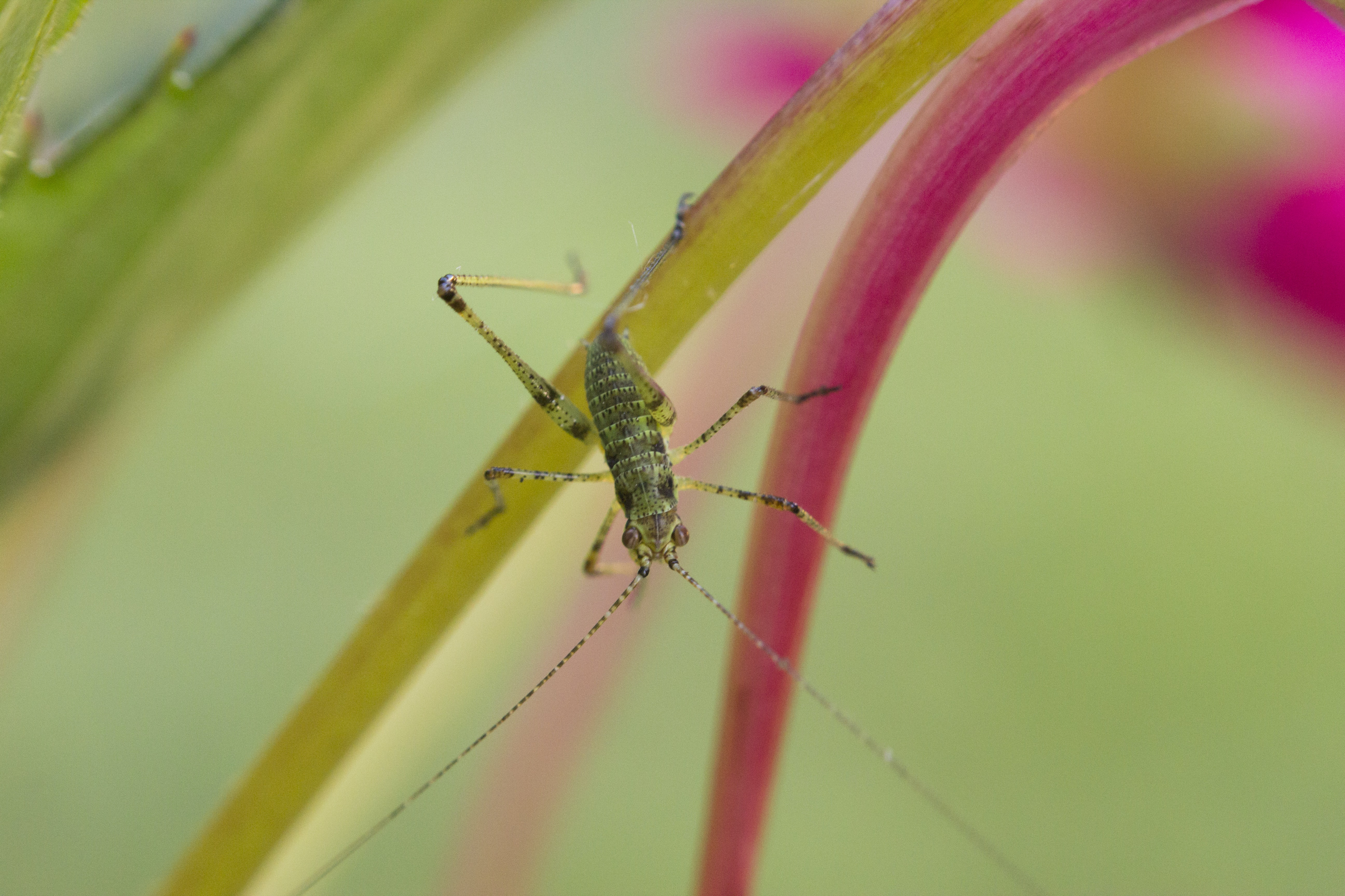 shallow focus photography of green insect