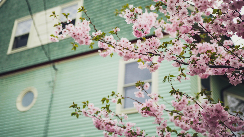 macro shot photography of pink flowers near window