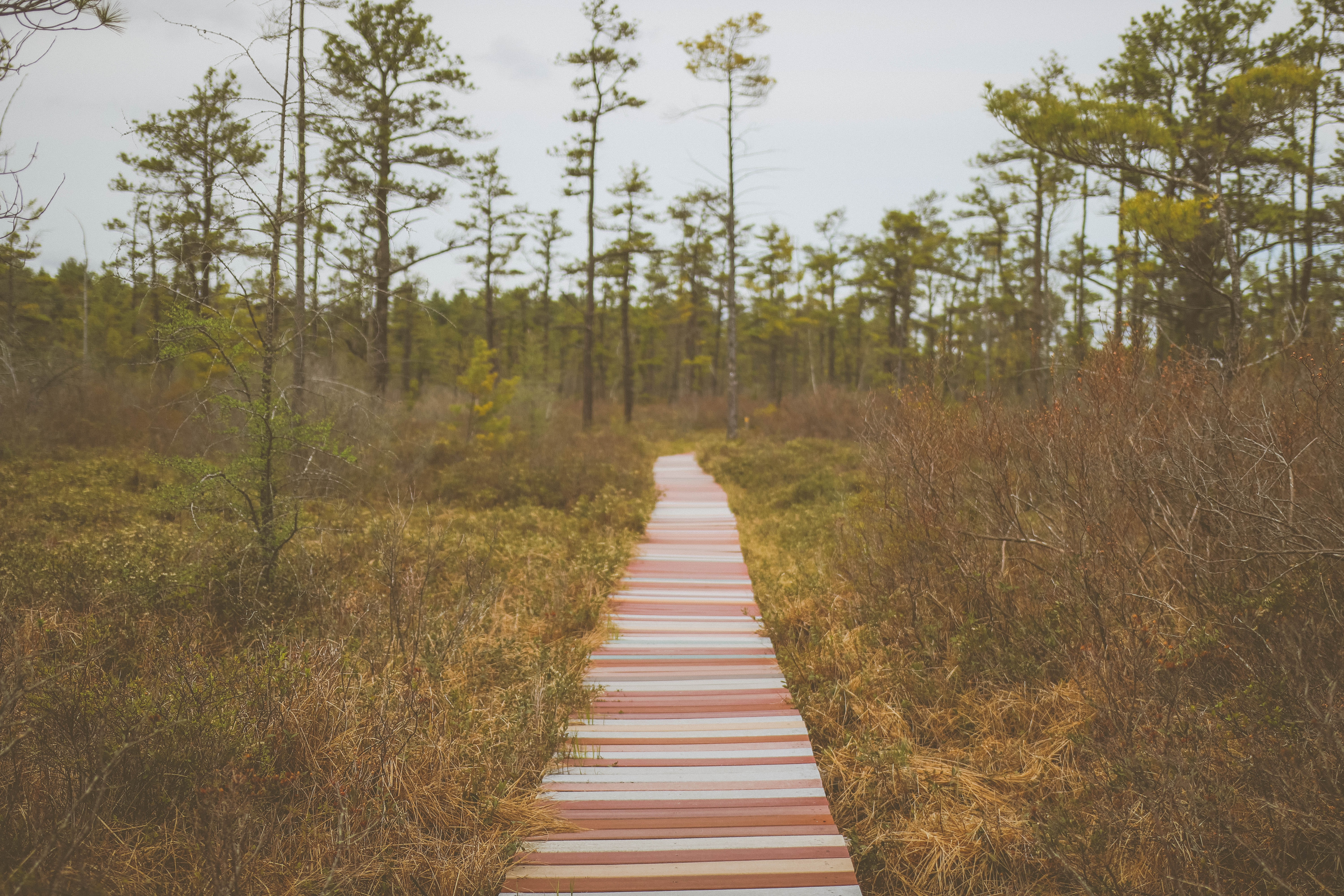 brown pathway surrounded by grasses
