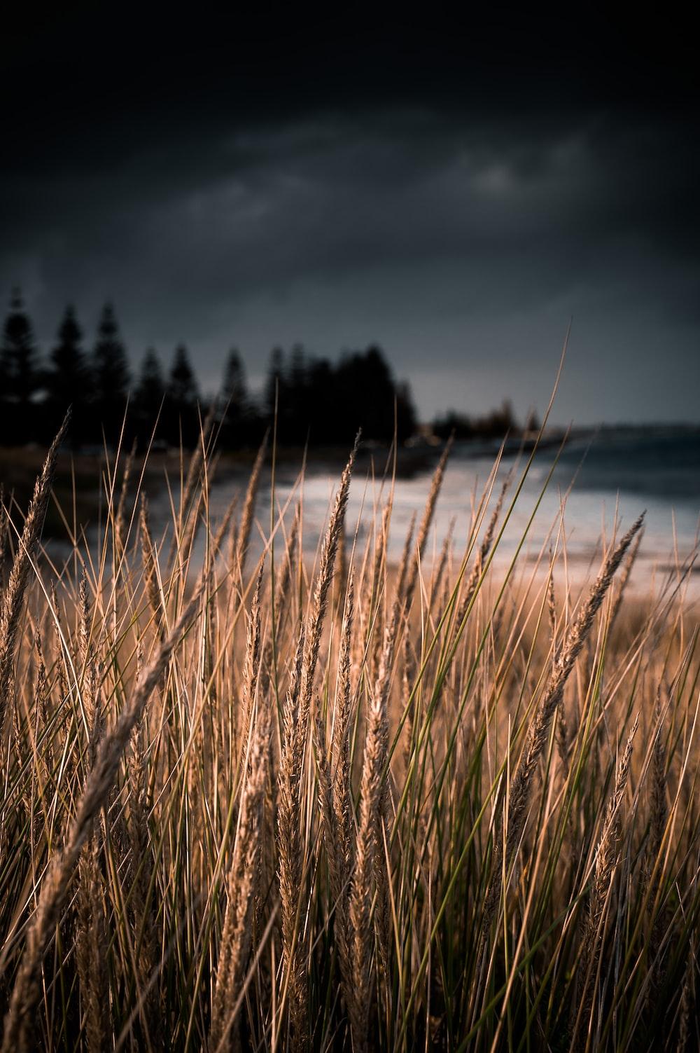 macro photo of grass field