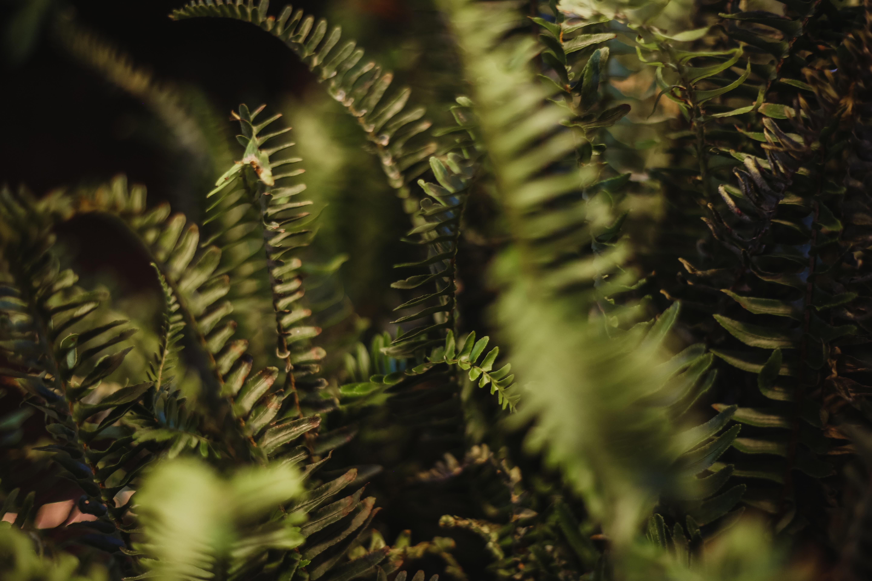 closeup photography of green ferns