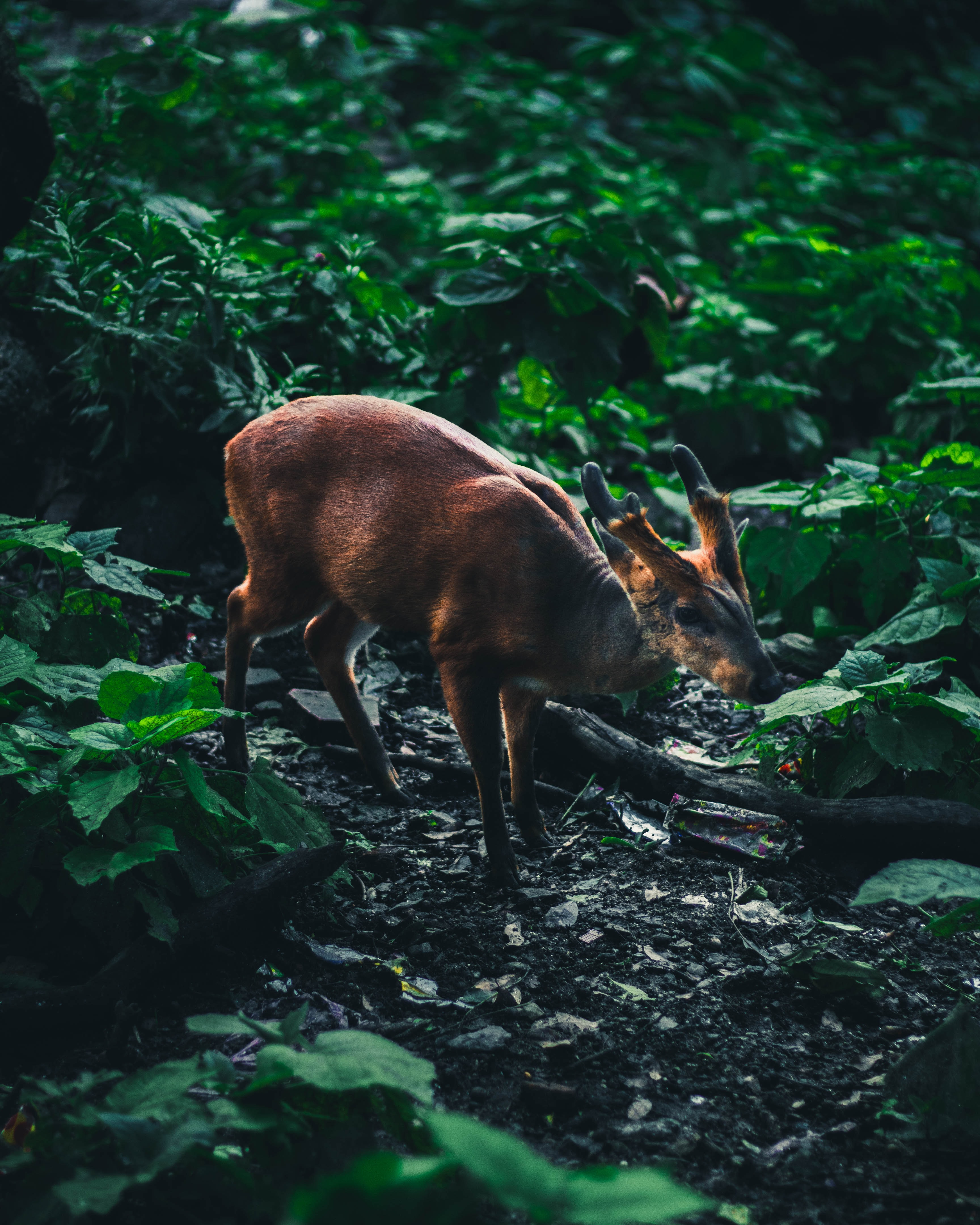 brown deer surrounded by green leafed plant