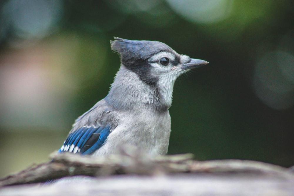 bird during day