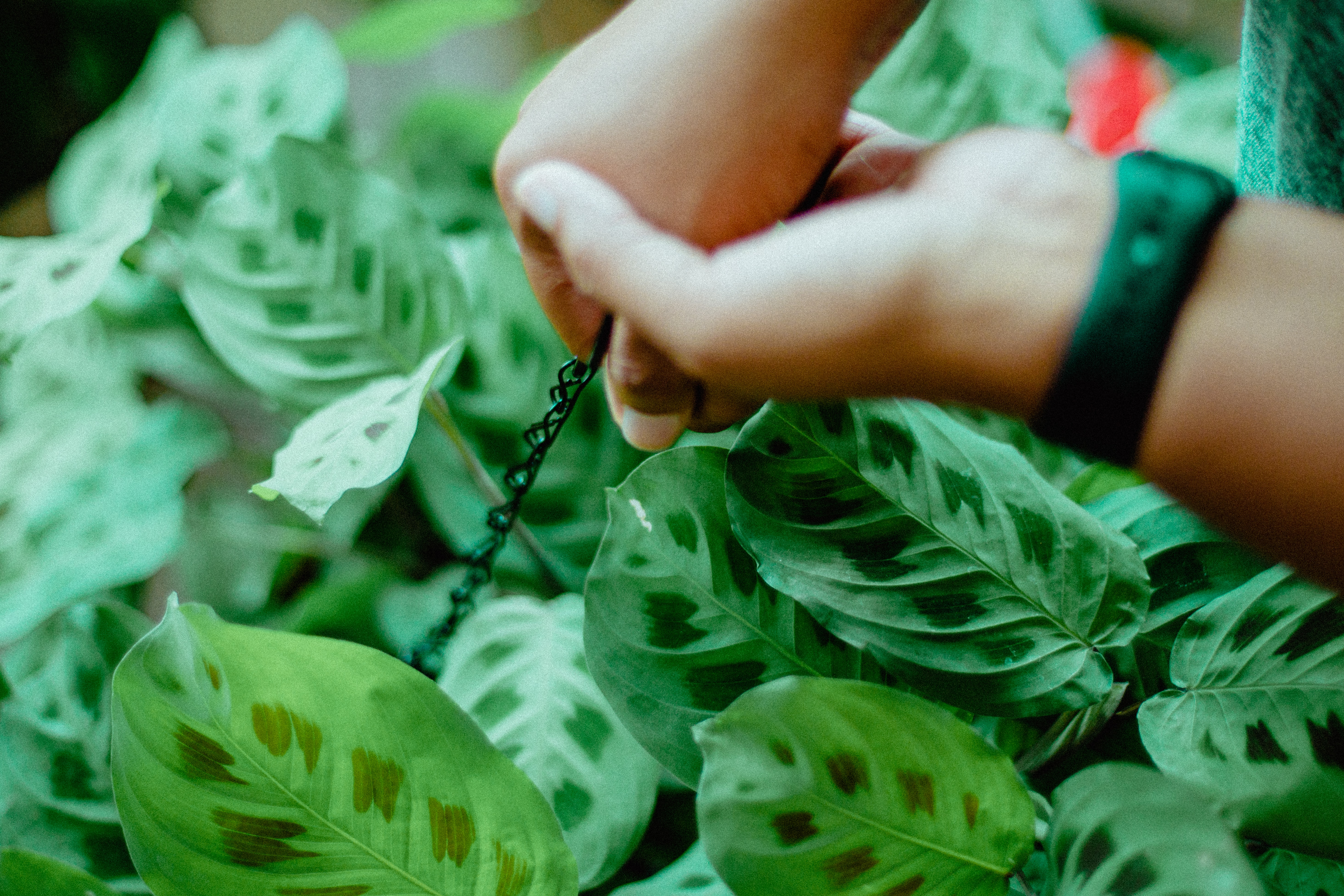 person holding black rope near green leaf plant