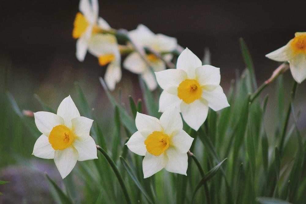 white and orange petaled flower plant