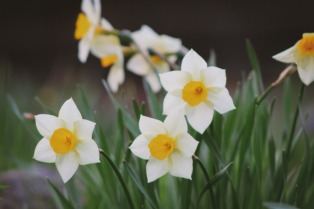 Spring flower pictures download free images on unsplash white and orange petaled flower plant mightylinksfo