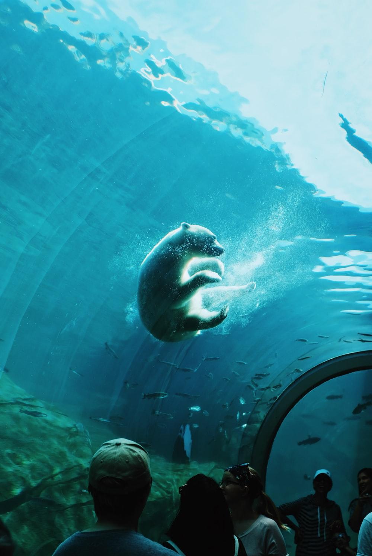 polar bear swimming under water in a ocean park