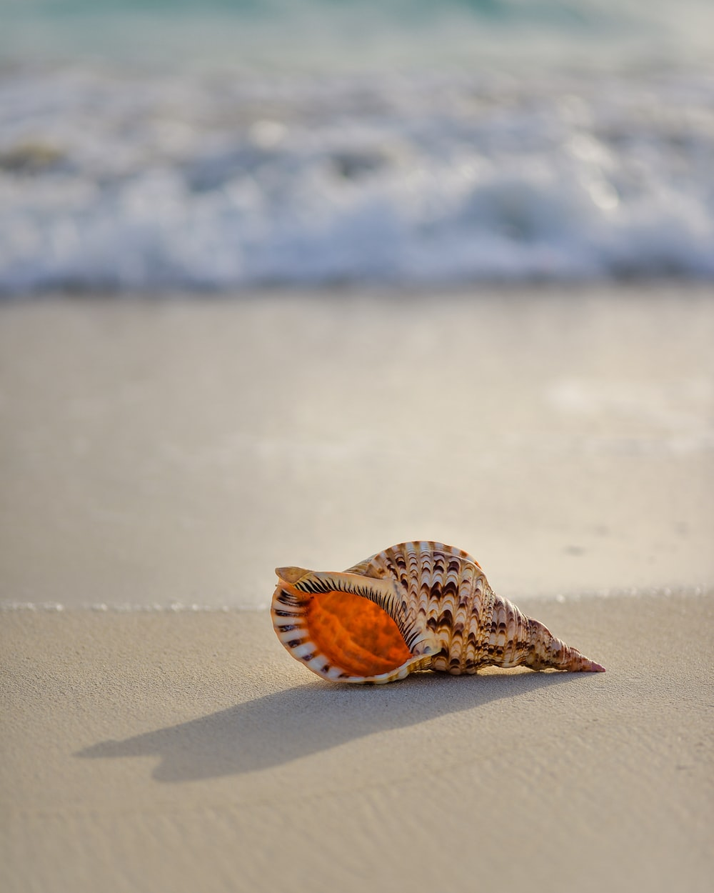 brown and white conch on seashore