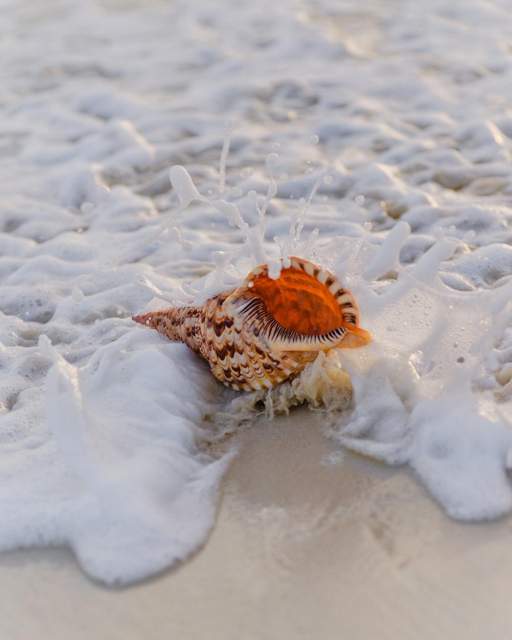 brown and black seashell